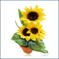 Pot of Sunflower, 14 cm